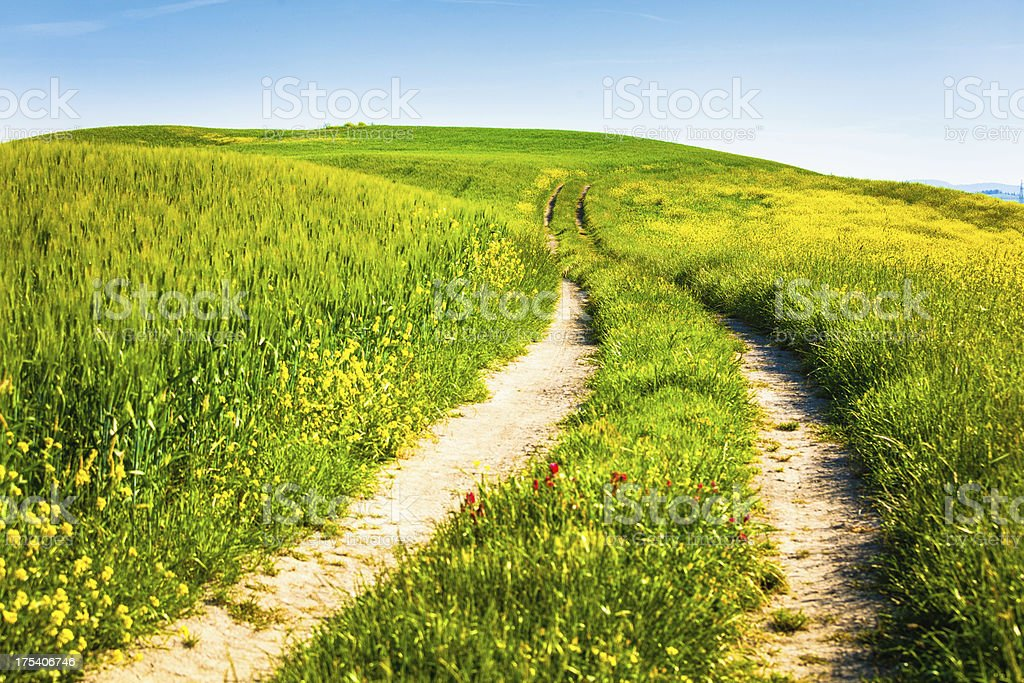 Country Road among Fields in Spring, Tuscany, Val d'Orcia royalty-free stock photo