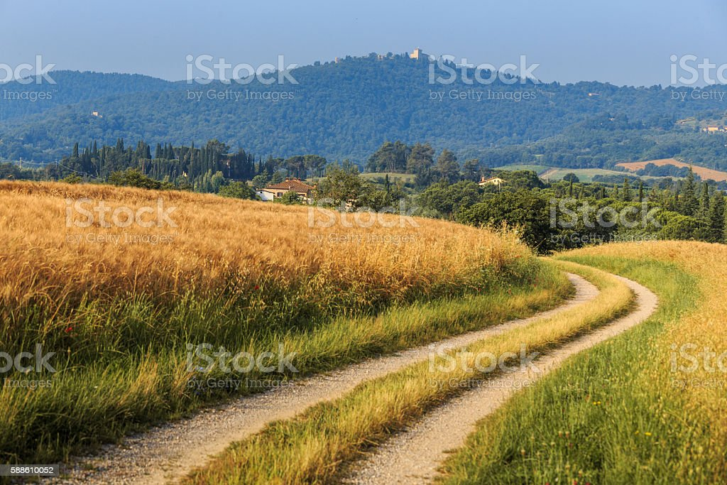Country road among wheat fields in Italy. stock photo