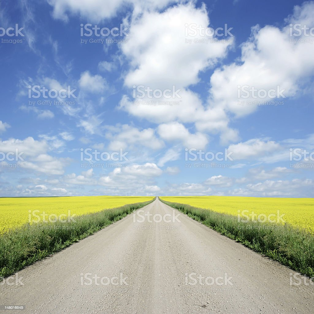 XXXL country road and canola royalty-free stock photo