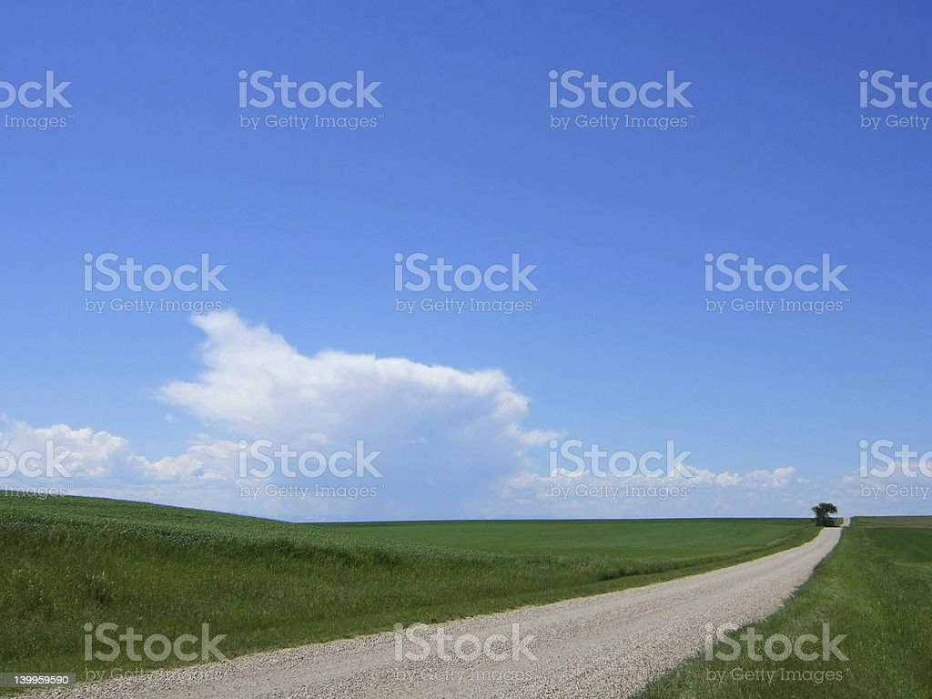Country road and lone tree. royalty-free stock photo