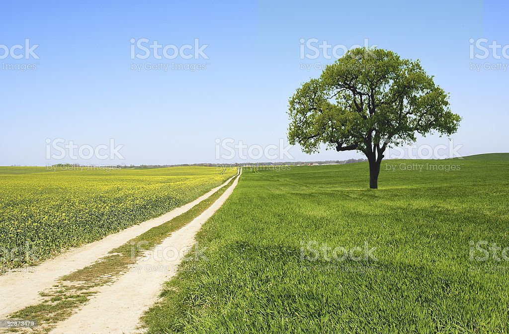Country Road and Tree - Landscape royalty-free stock photo