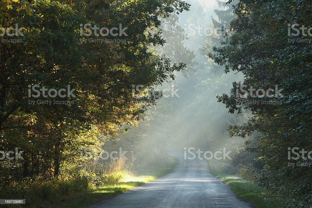 Country road at dawn royalty-free stock photo