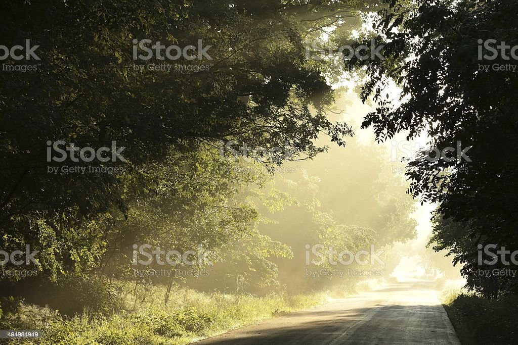 Country road at dawn stock photo