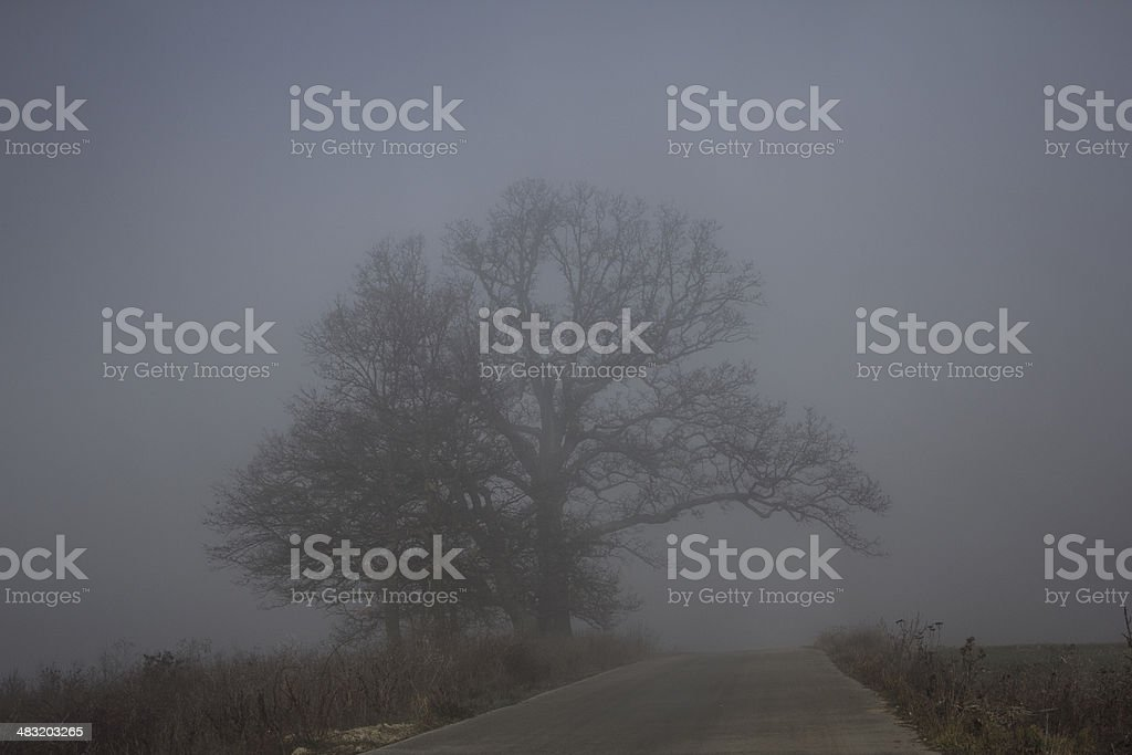 Country road at fog. royalty-free stock photo