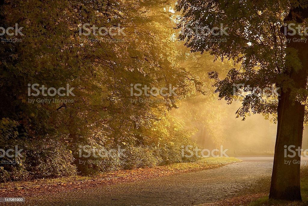 Country road at sunset royalty-free stock photo