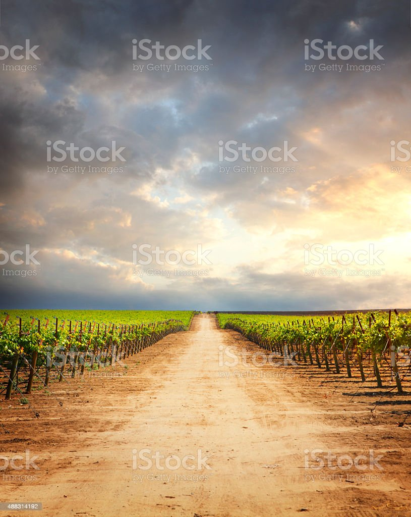 Country road at vineyard in sunset light stock photo