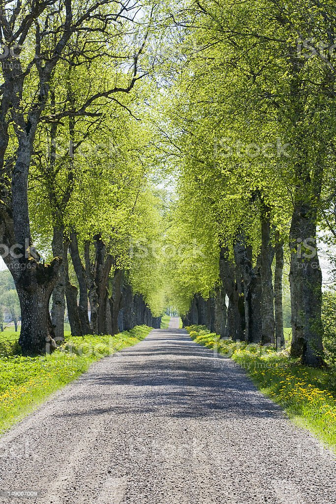 Country road avenue royalty-free stock photo
