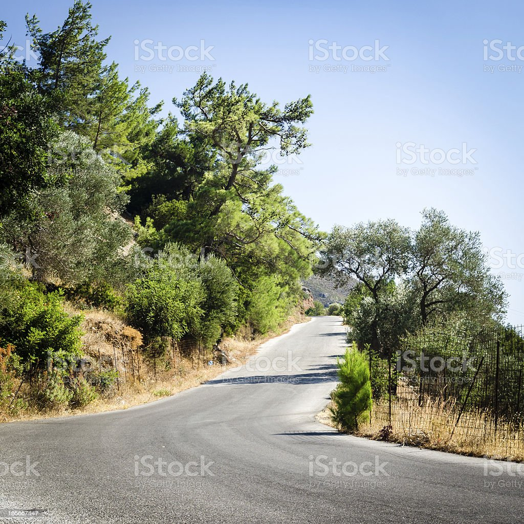 Country road between fields of olive trees royalty-free stock photo