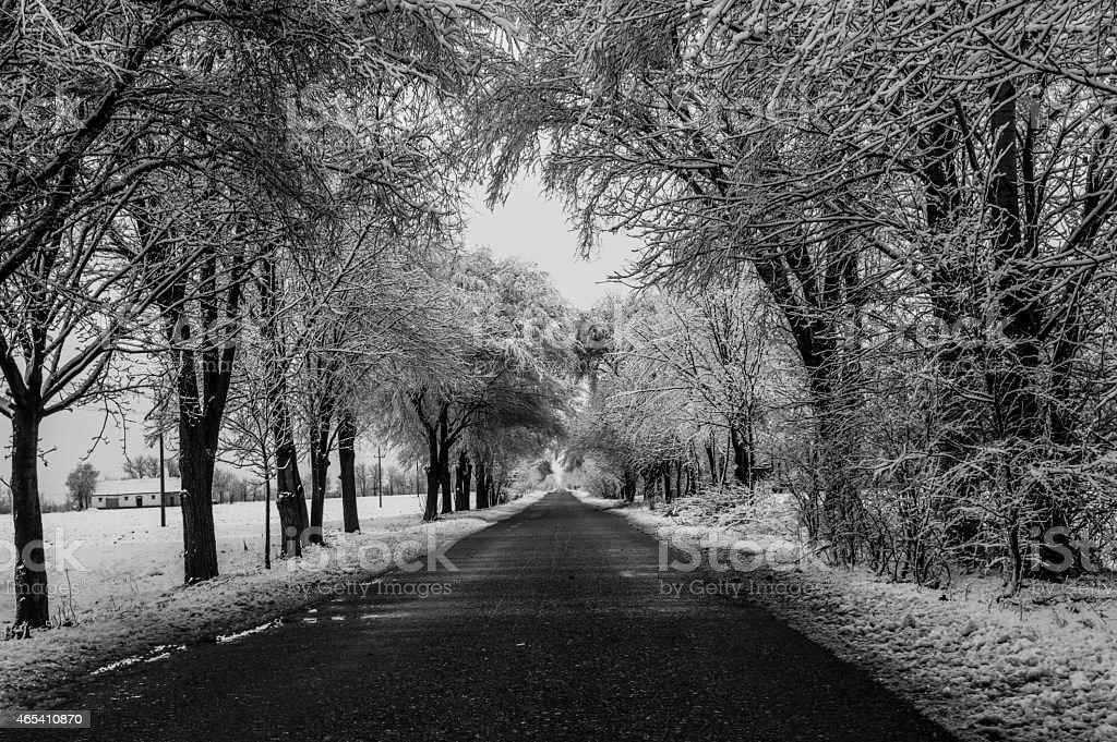 Country road during winter surrounded by forest stock photo