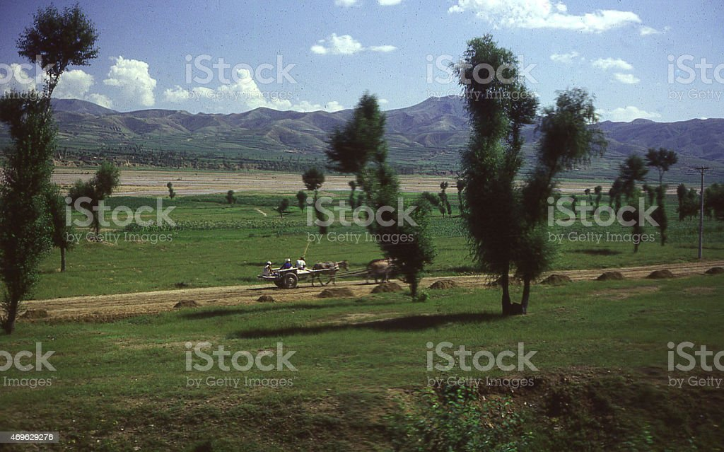 Country road farm cart scattered trees reforestation Inner Mongolia China stock photo