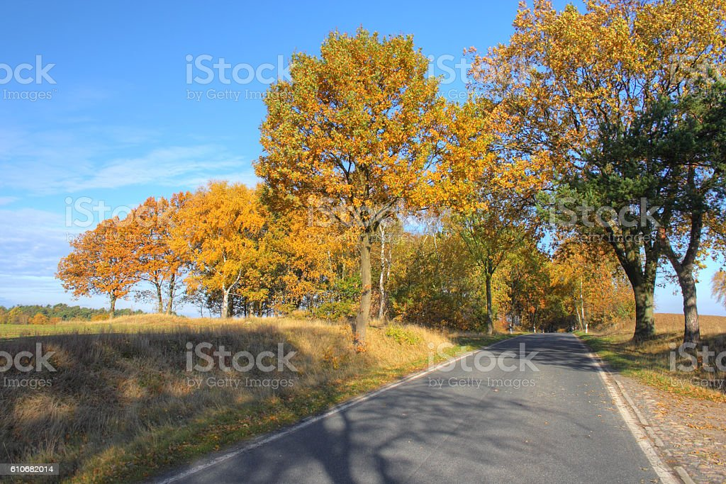 Country road in autumn, Lüneburger Heide stock photo