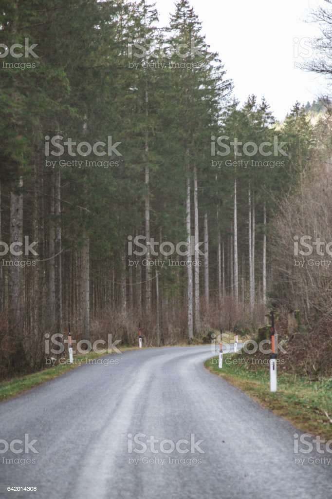 Country road in conifer forest with snow markers stock photo