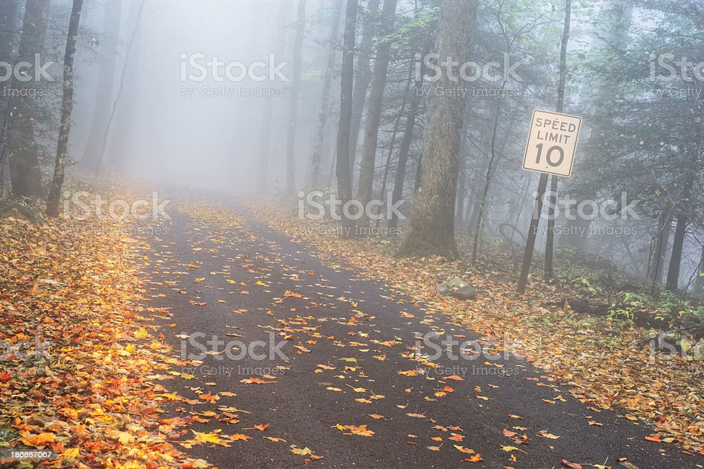 Country Road in Fog royalty-free stock photo