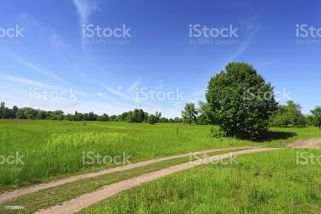 country road in green field and trees royalty-free stock photo
