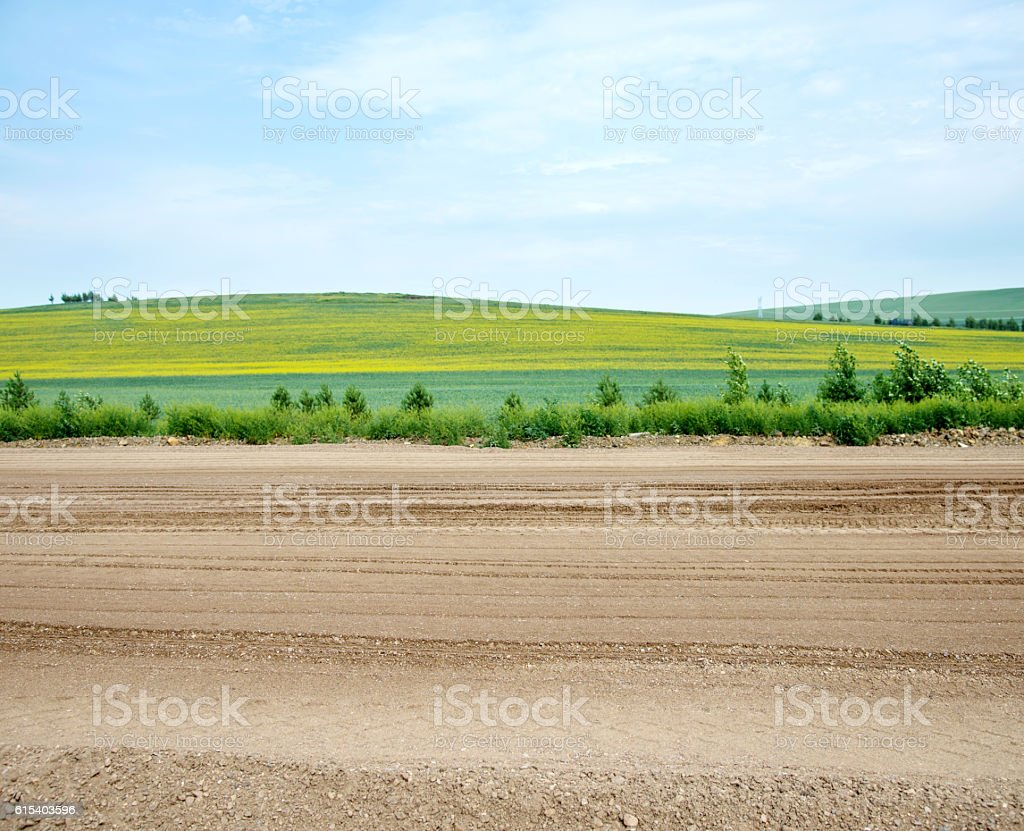Country road in green fields stock photo
