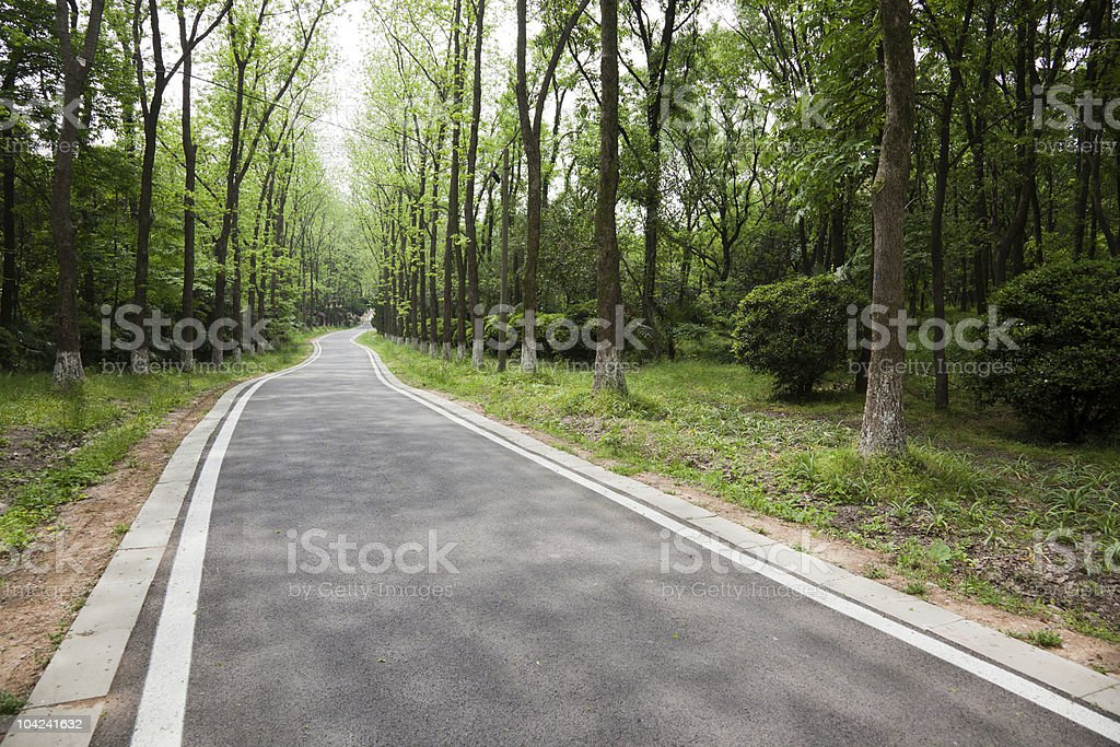 Country road in National Wildlife Reserve royalty-free stock photo