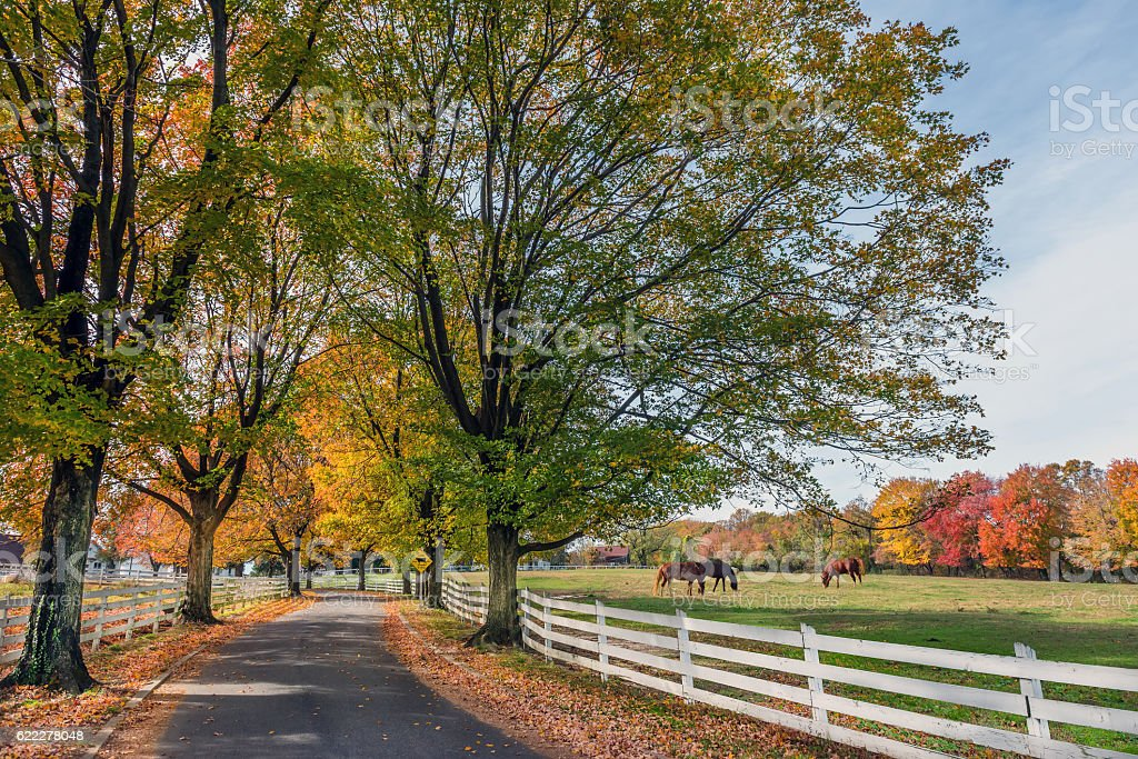Country Road in rural Maryland during Autumn stock photo
