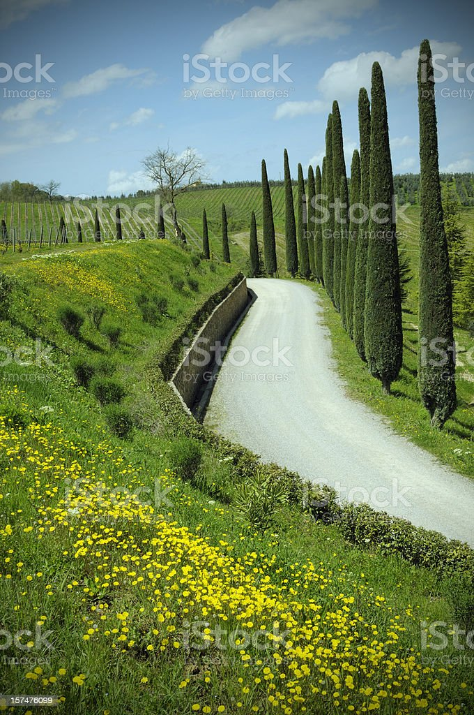 country road in spring time royalty-free stock photo