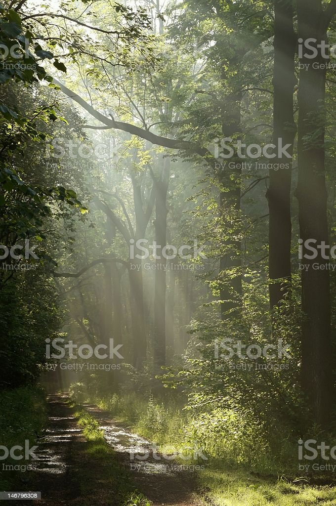 Country road in the forest royalty-free stock photo