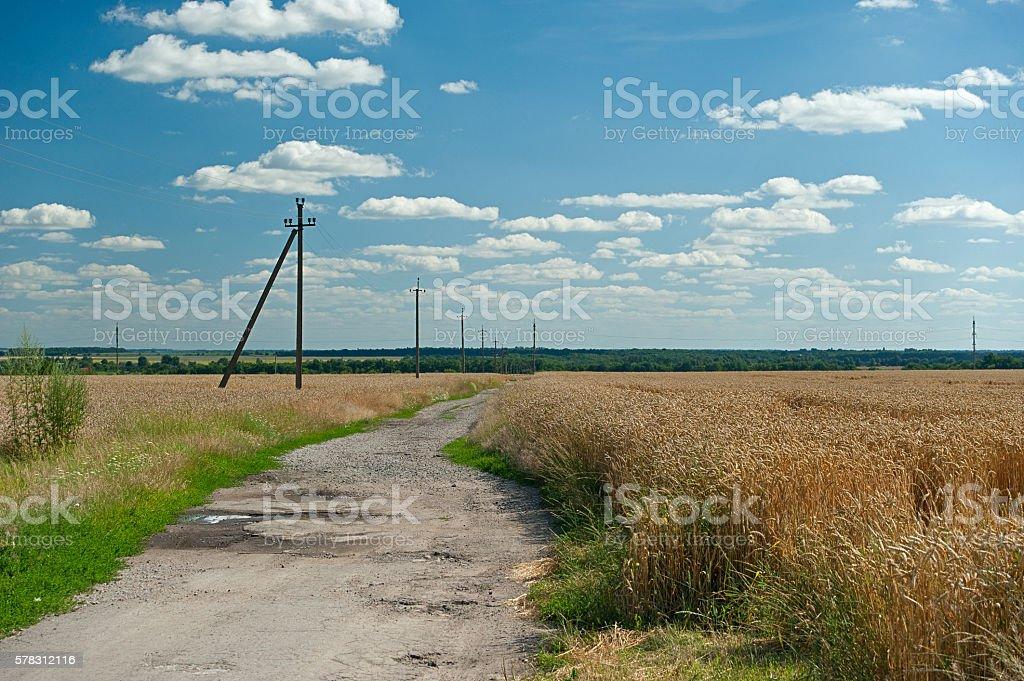 country road in the wheat fields Lizenzfreies stock-foto