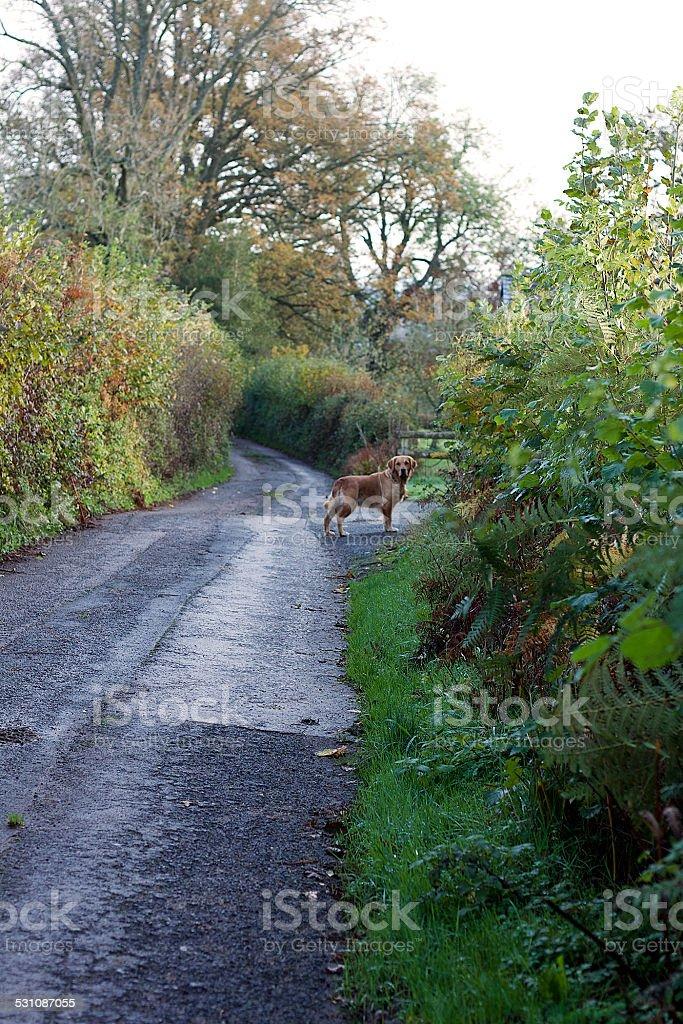 Strada di campagna in Galles foto stock royalty-free