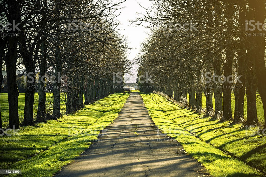 Country Road Lined with Trees at Sunset royalty-free stock photo