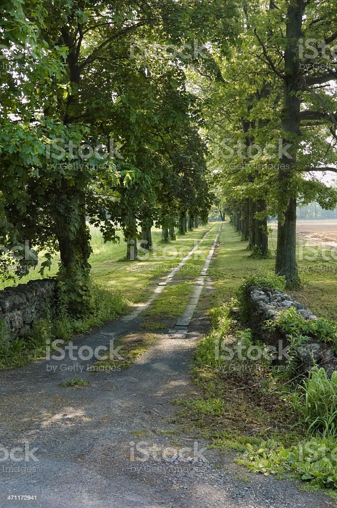 Country Road Lined with Trees royalty-free stock photo