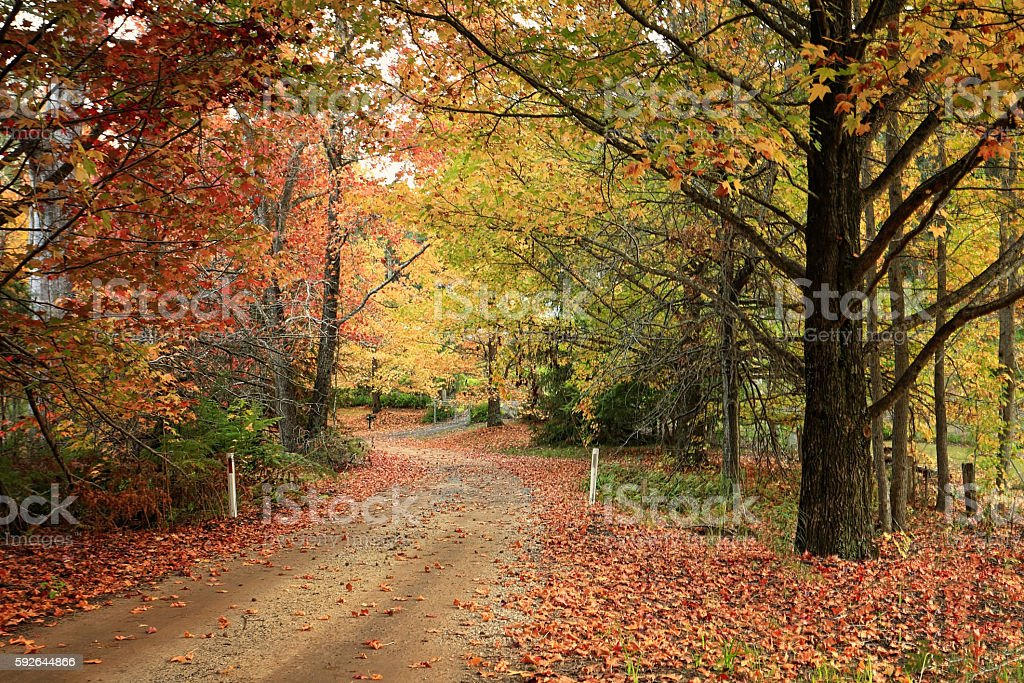 Country road meandering through trees with autumn foliage stock photo