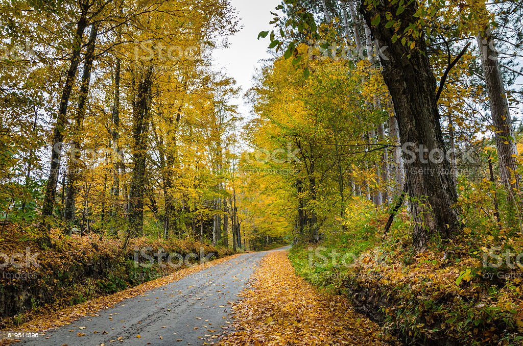 Country Road on a Cloudy Autumn Day stock photo