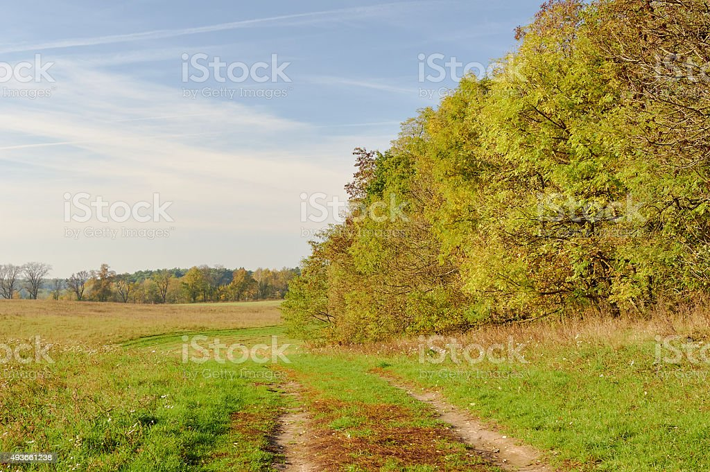 country road on the edge of a forest stock photo