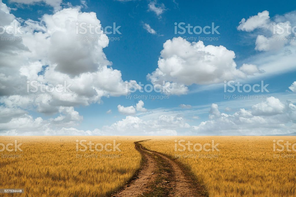 Country Road stock photo