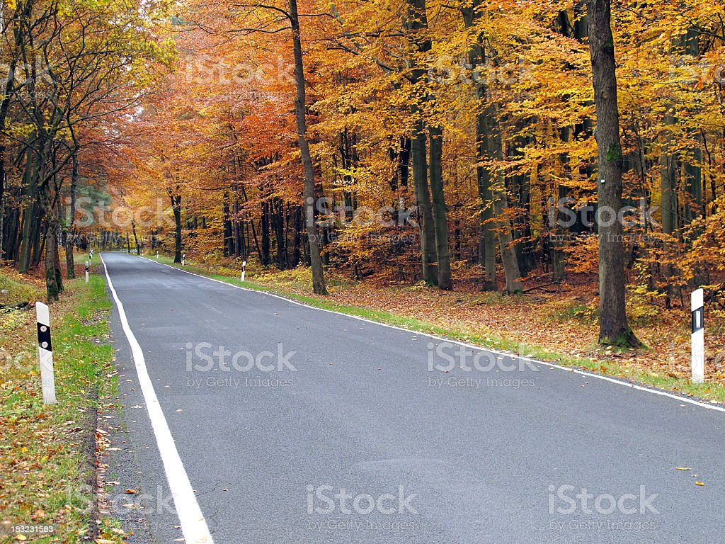 country road through a beech tree forest in autumn time royalty-free stock photo