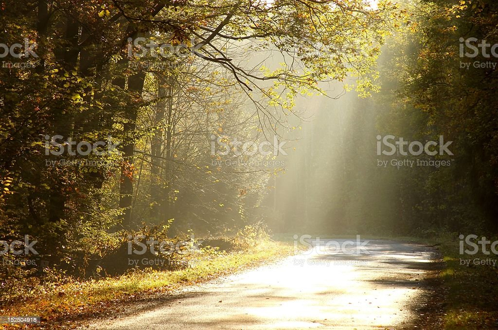 Country road through a misty forest at dawn stock photo