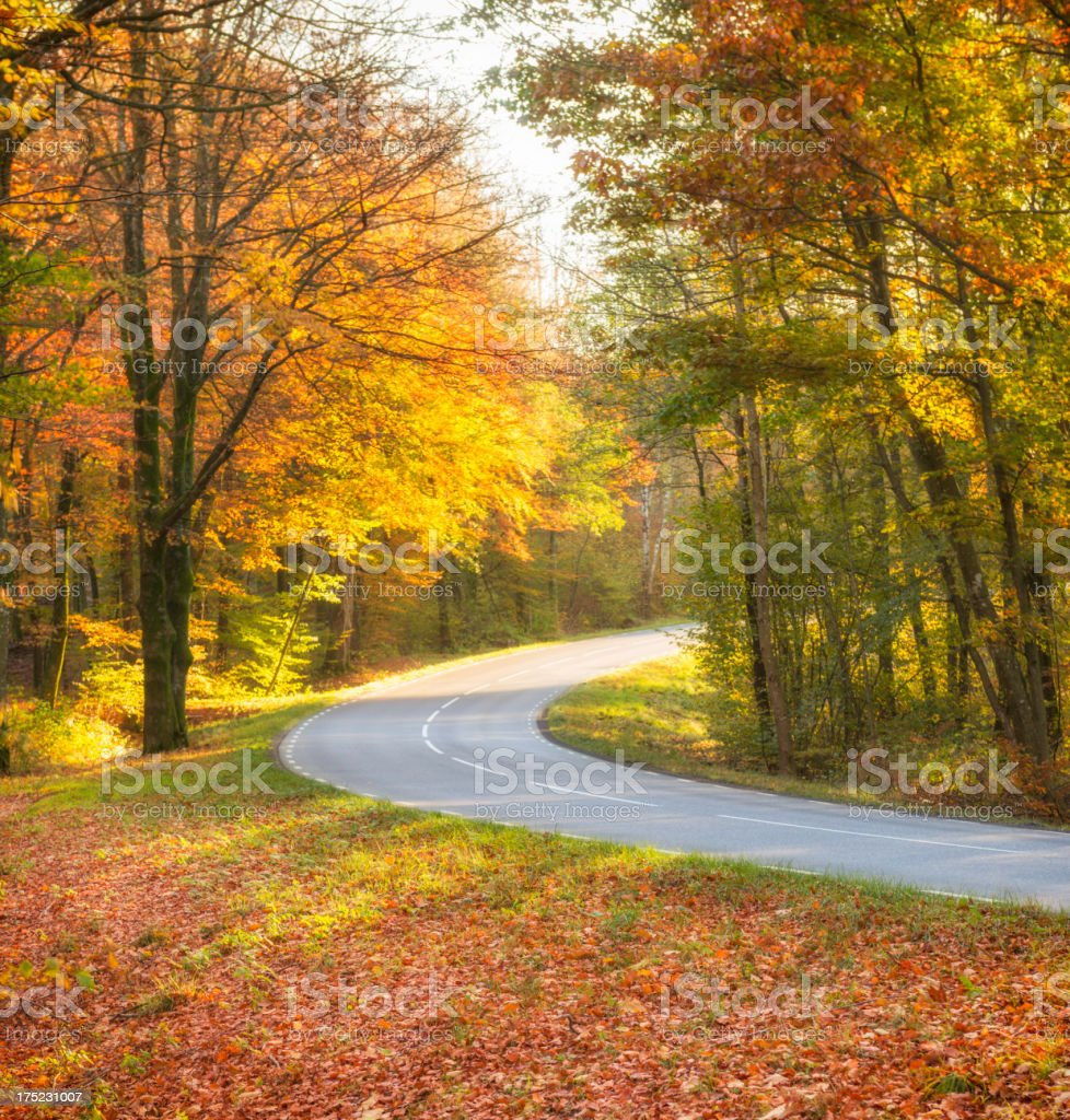 Country road through autumn beech forest royalty-free stock photo