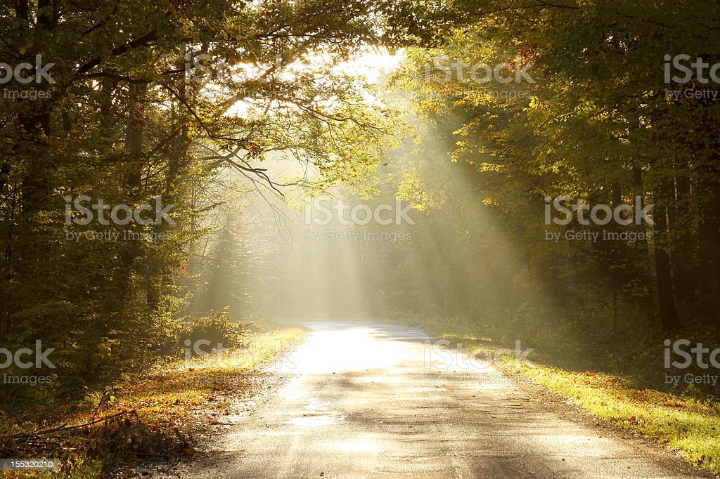 Country road through autumn woods at dawn stock photo