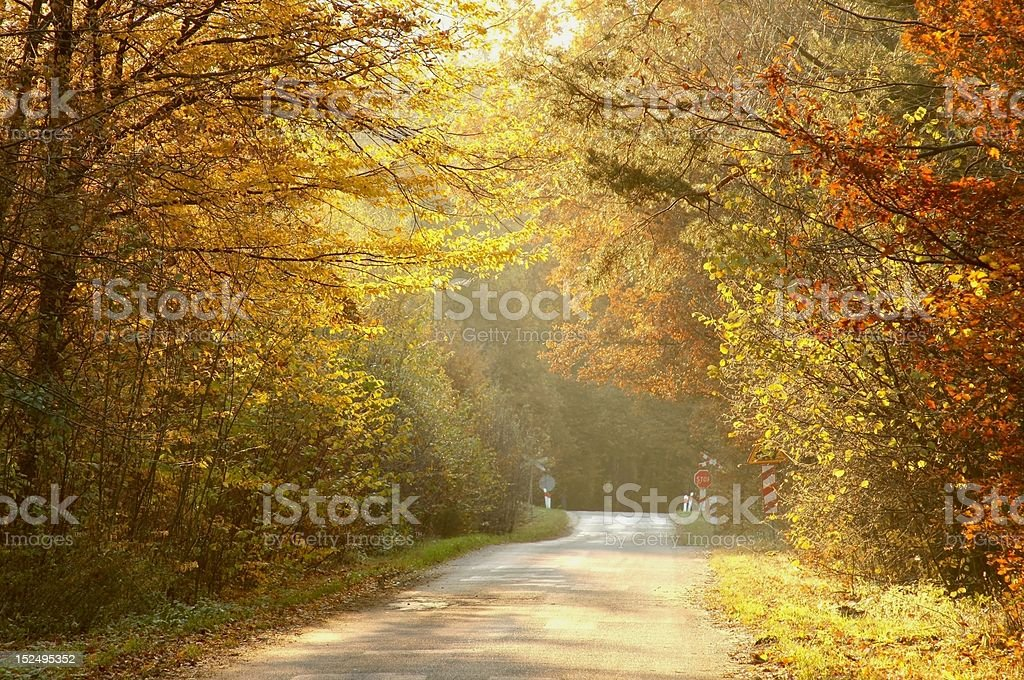 Country road through autumn woods at sunset royalty-free stock photo