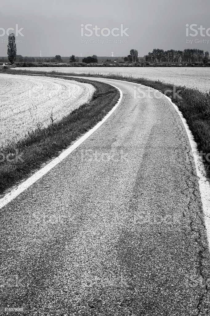 Country road through paddy fields. BW image stock photo