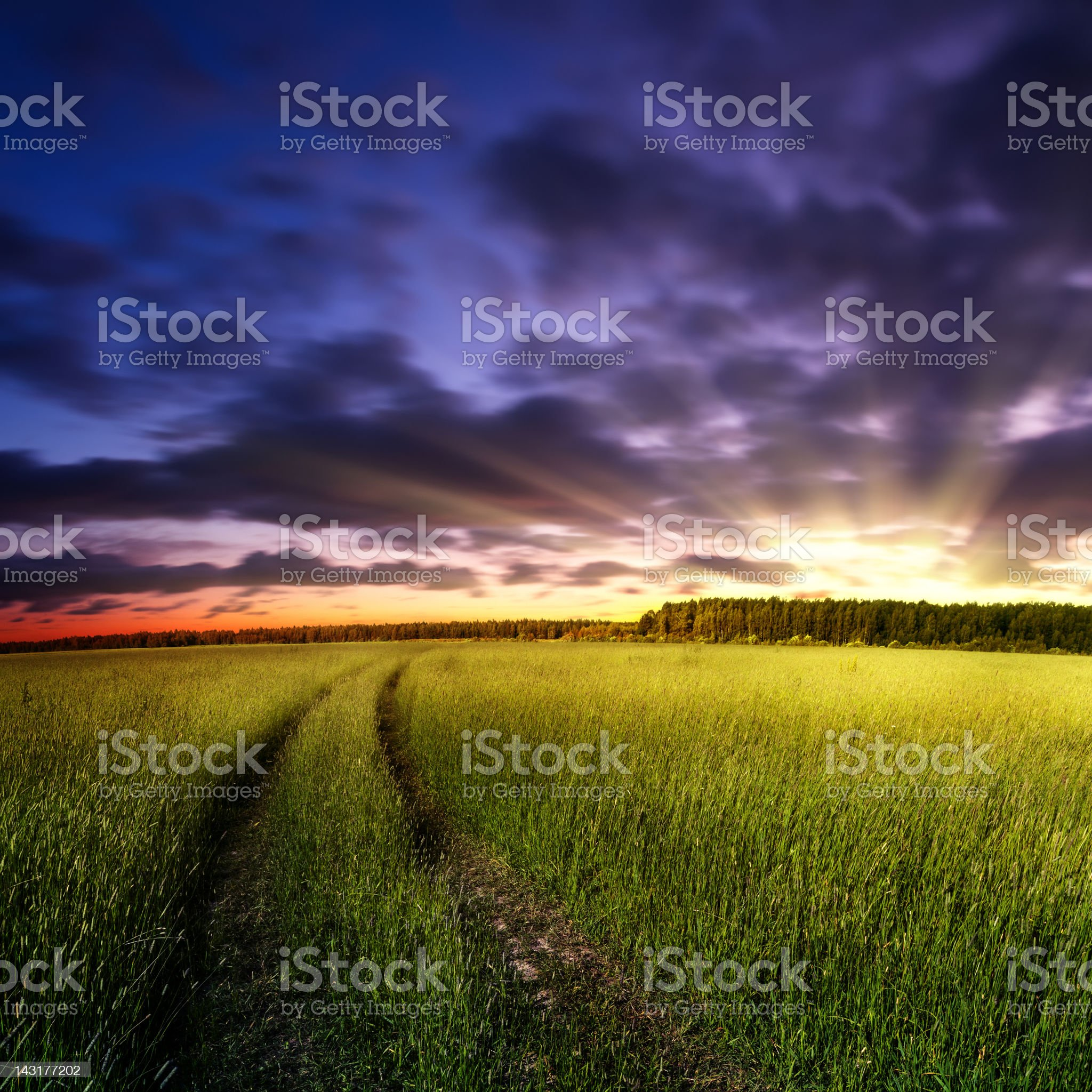 Country road through the field royalty-free stock photo