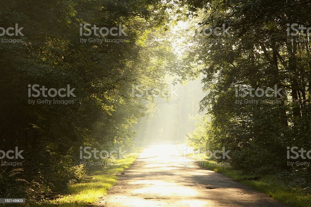 Country Road through the forest at dawn royalty-free stock photo