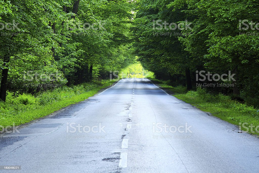 Country road through the forest royalty-free stock photo
