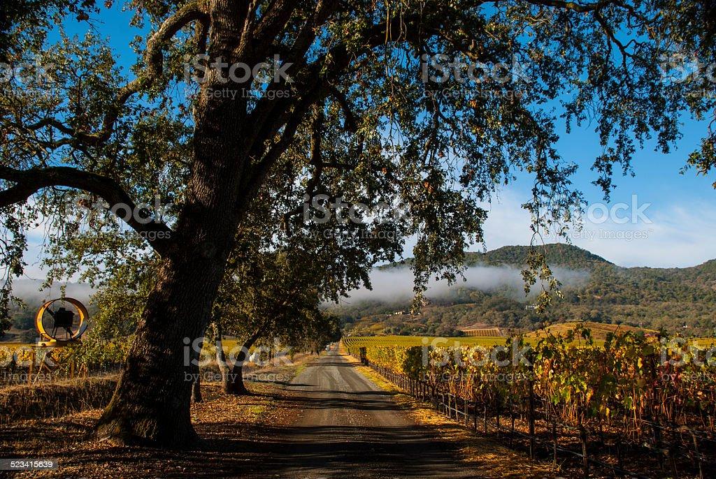 Country Road through Vineyards Autumn near Yountville Napa Valley California stock photo