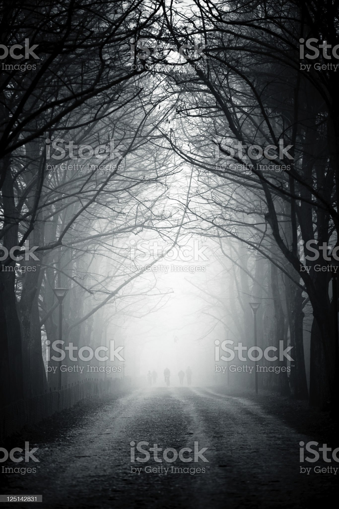Country Road Tree Canopy in the Fog, Nobody royalty-free stock photo