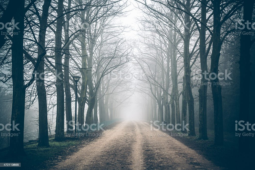 Country Road Tree Canopy in the Fog stock photo