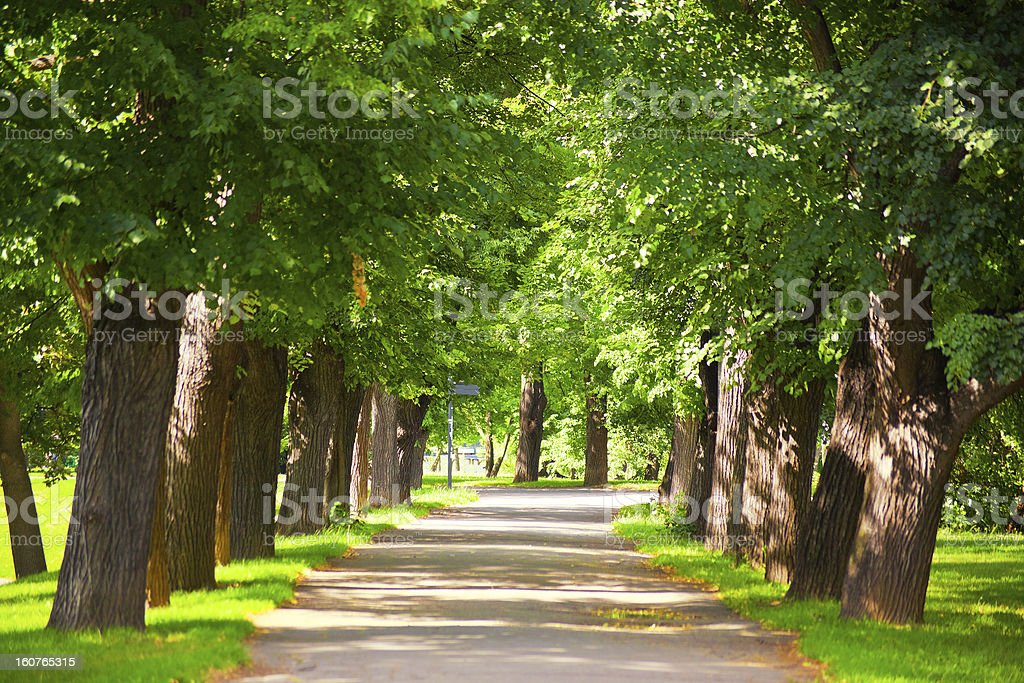 Country Road, Tree Canopy, Prague royalty-free stock photo