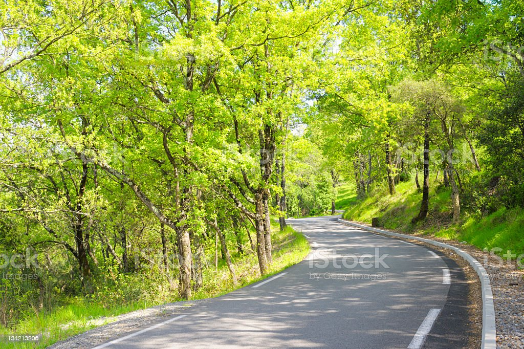 Country Road Winding Through Green Trees in Sunlight royalty-free stock photo