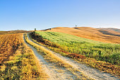 Country Road winding through the Fields, Val d'Orcia, Tuscany, Italy