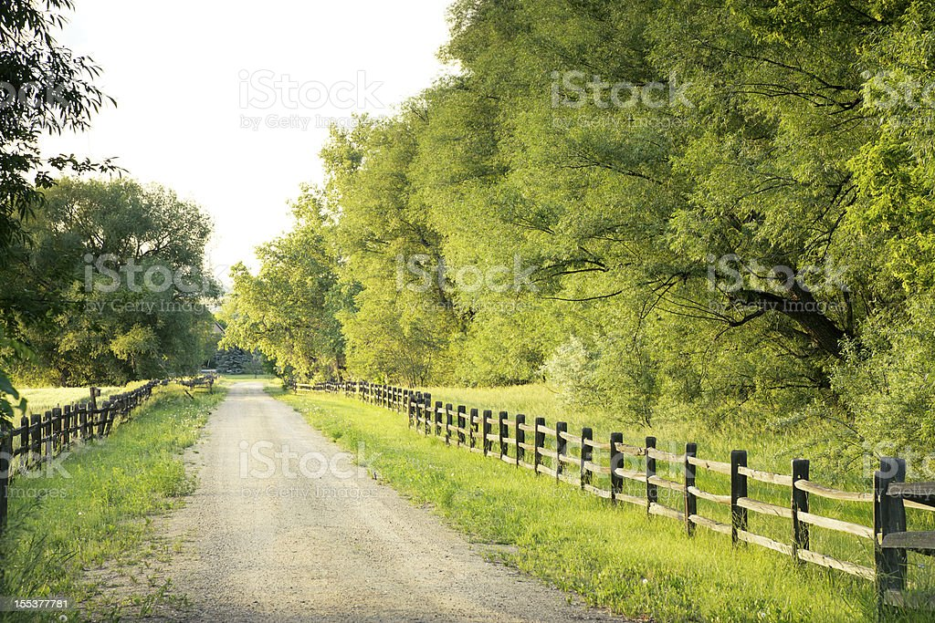 Country road with big green trees and fences at either side stock photo
