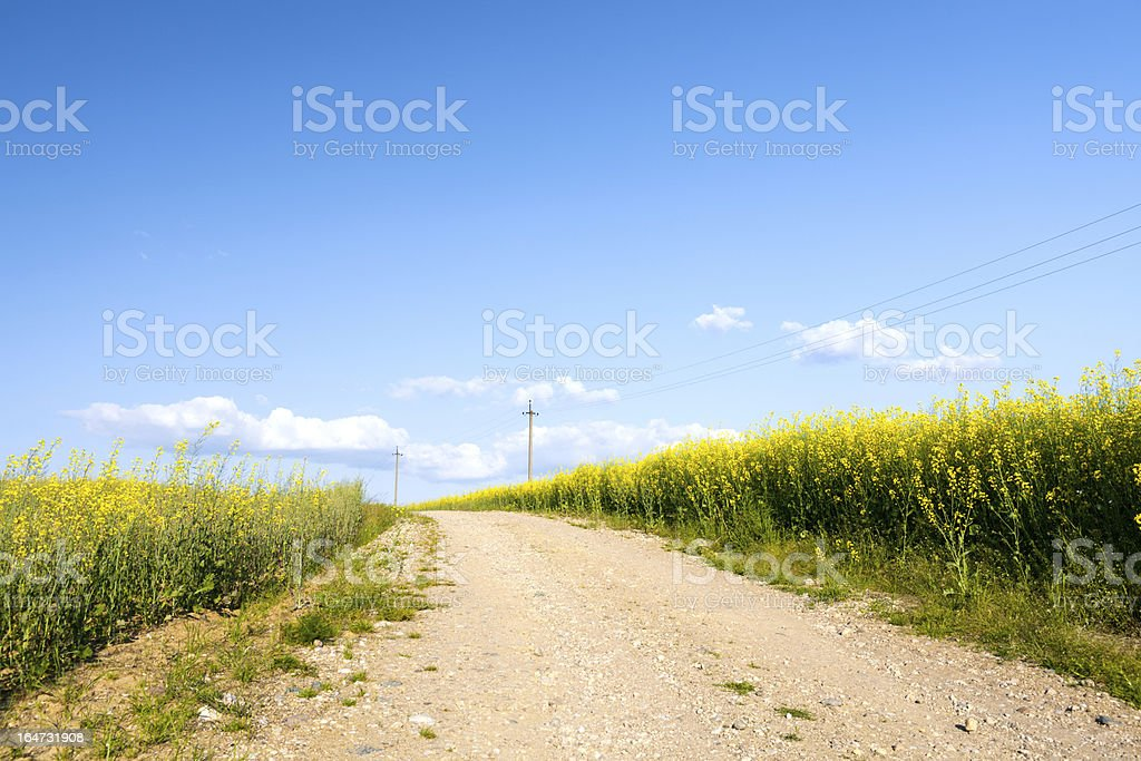 Country road with blooming canola field royalty-free stock photo