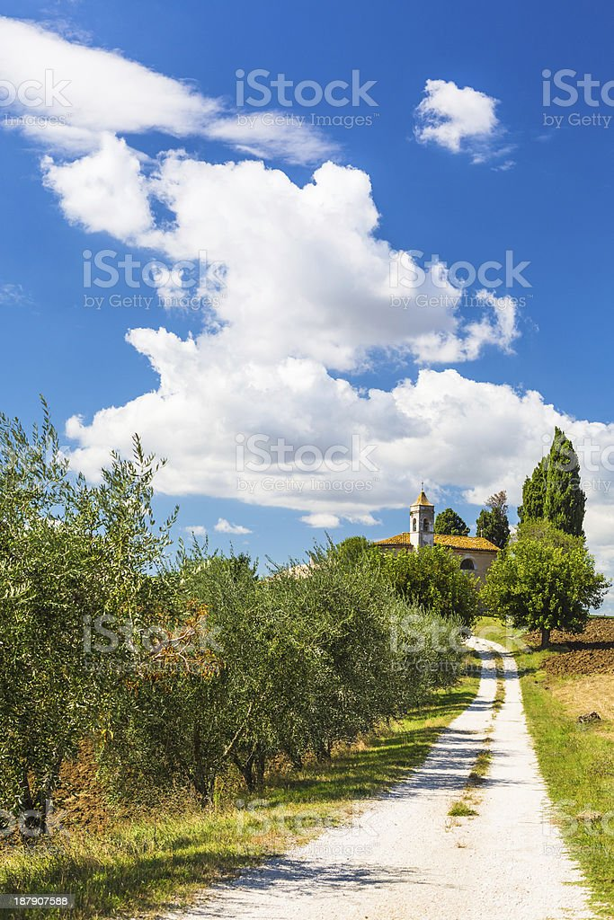 Country road with olive trees royalty-free stock photo