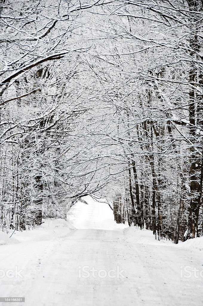 Country road with snow covered maple trees royalty-free stock photo